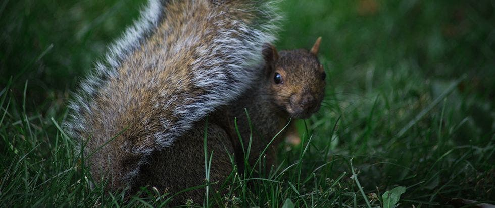 How to Protect Your Patio from Squirrels